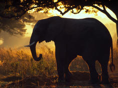 Shadow_elephant
