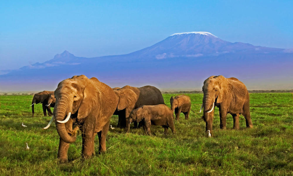 Elephants and mountain