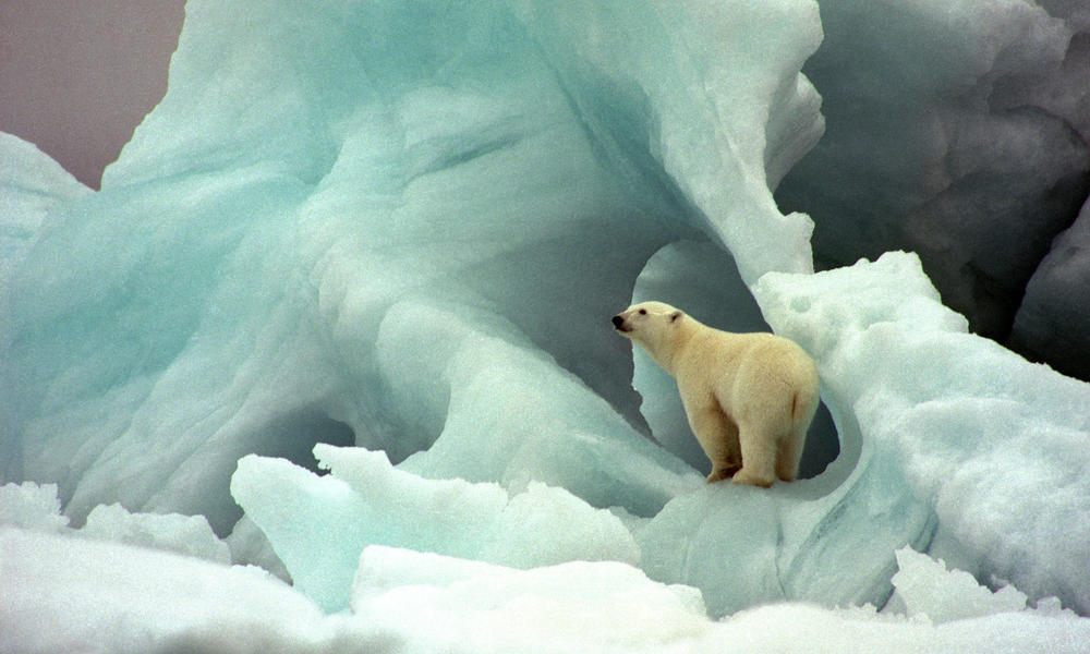 Leaders Make Commitment To Help Polar Bears