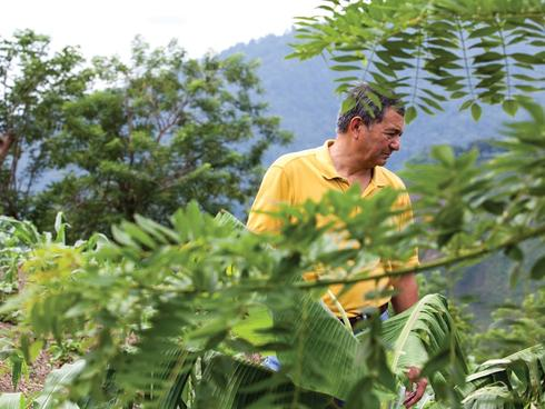 José Vásquez, the director of WWF's agriculture programs in Mesoamerican Reef catchments, surveys a mountainside farm in the Sierra del Merendón.