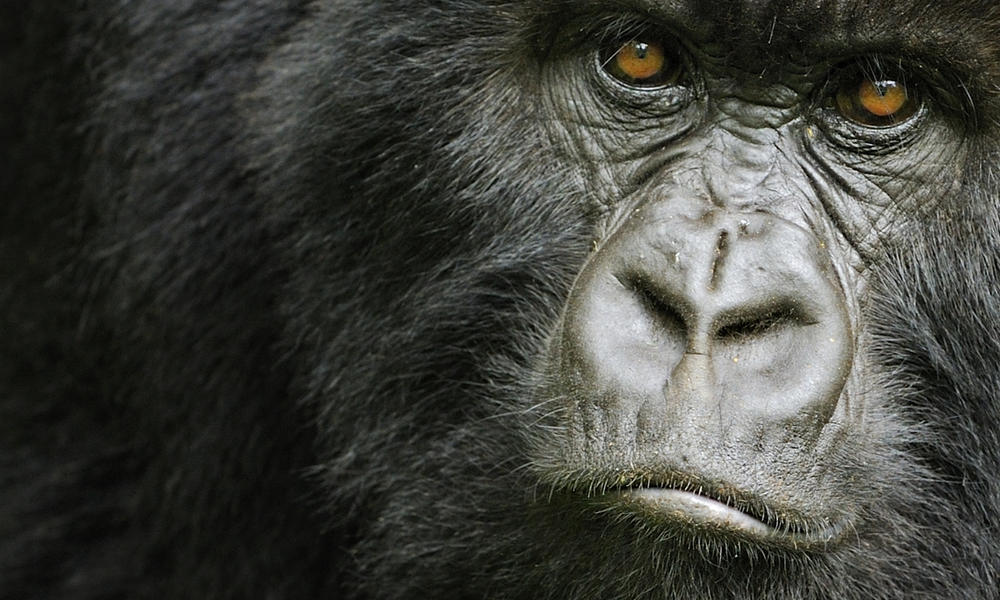 301360_natureplcom_Andy_Rouse_WWF-Canon_Rwanda_MG.jpg