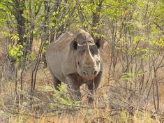 Black rhino rachel kramer dsc 3946 for web