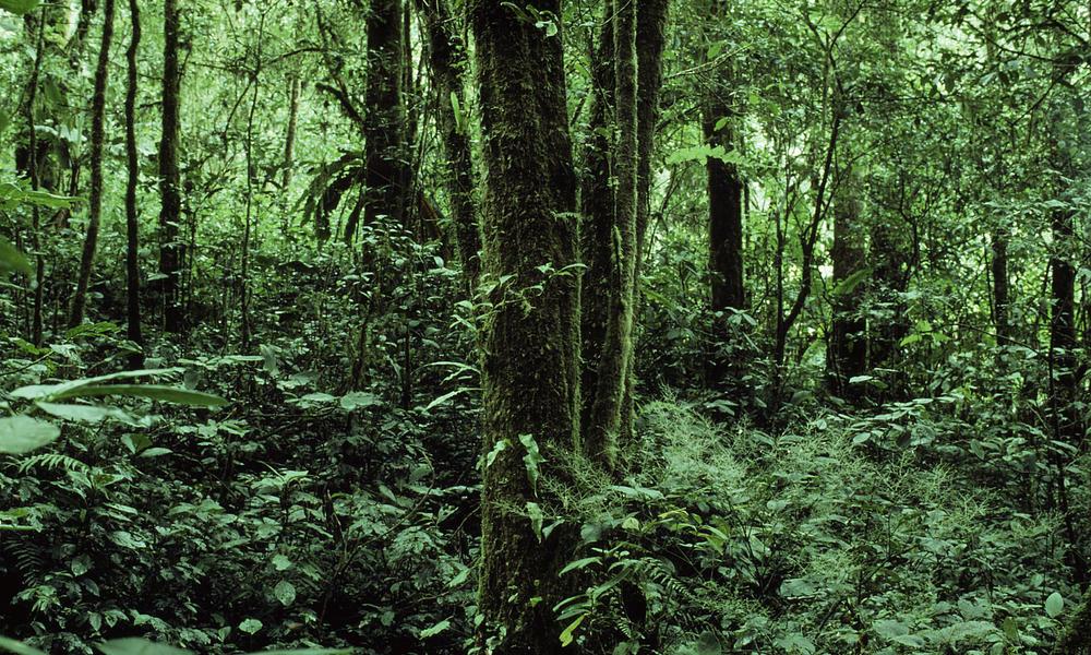 sumatra forest