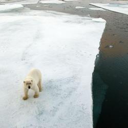 Polar_bear3_07.24.2012_help