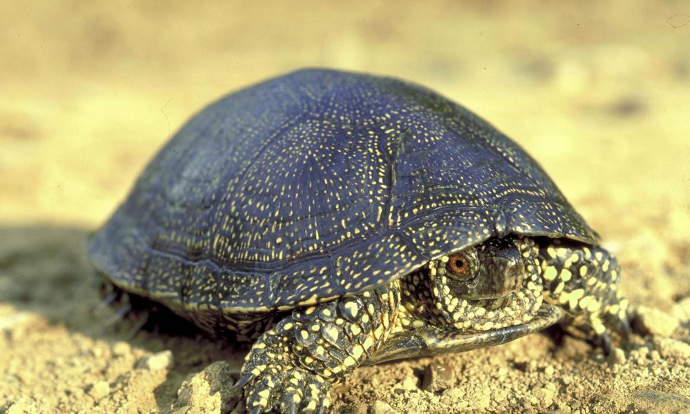 Freshwater habitat animals