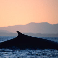 Fin whale 07.24.2012 help