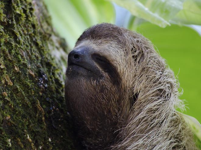 closeup of sloth