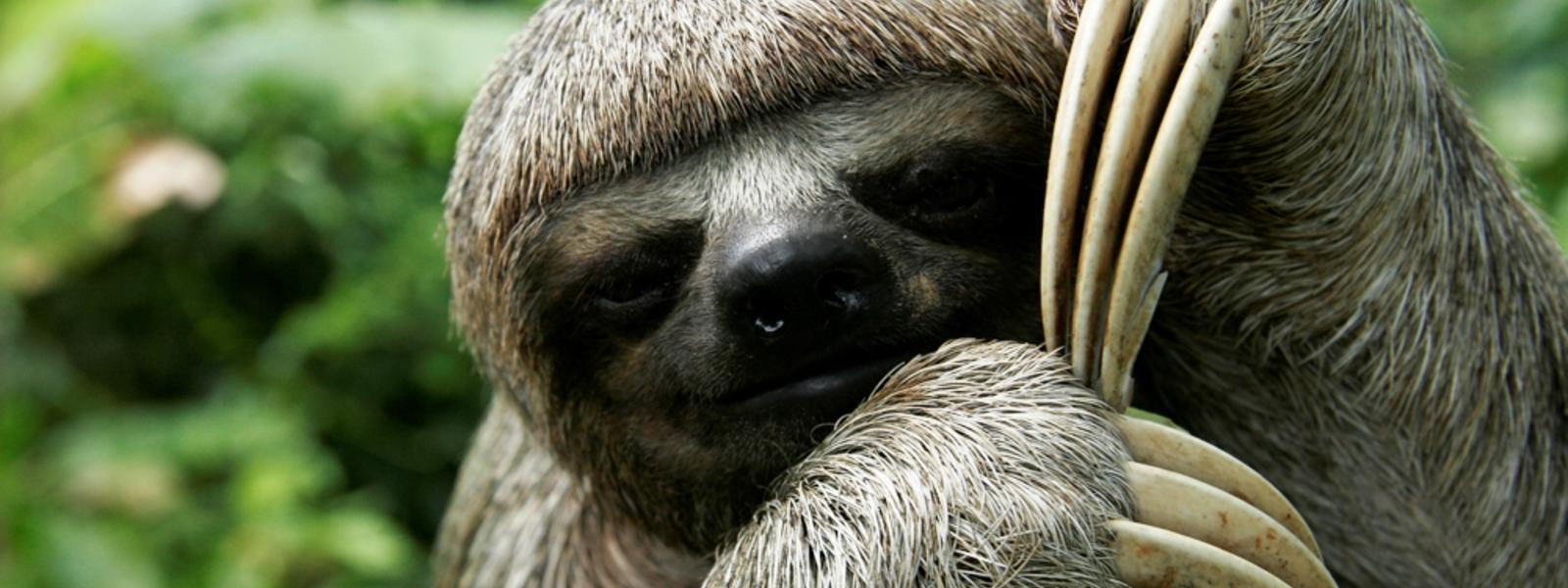 all sloth species