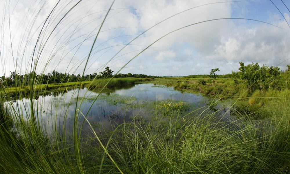 freshwater marsh Sundarbans