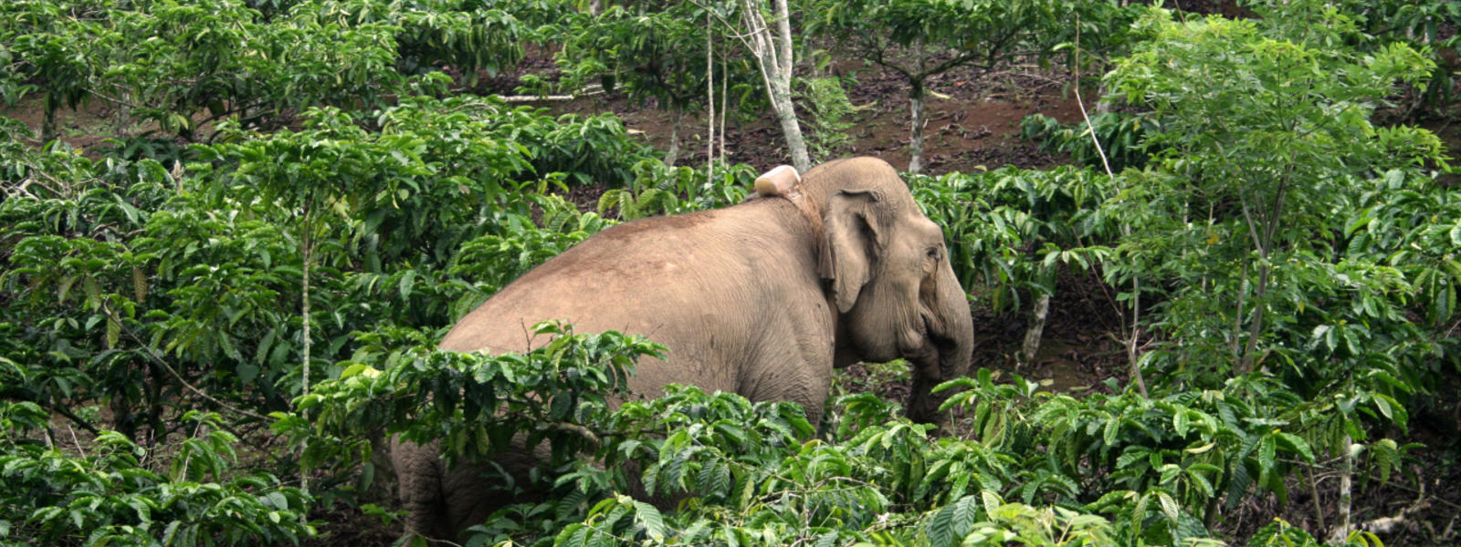 how technology is changing conservation blog posts wwf