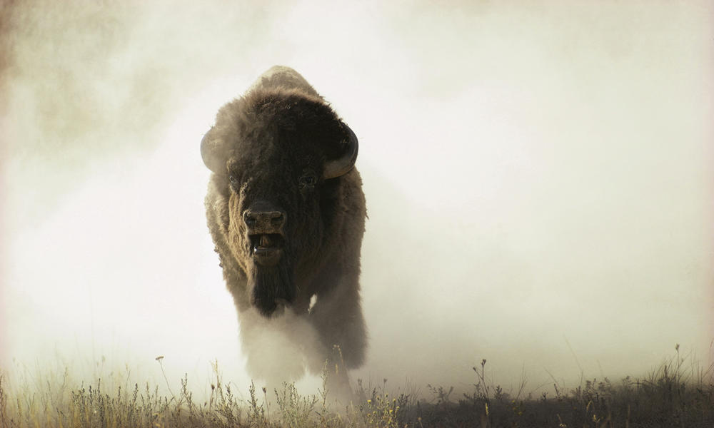a symbol of hope us designates bison as the national