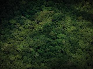 Aerial View of Amazon