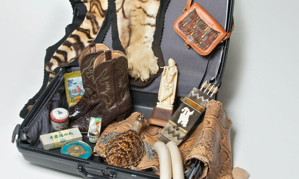 Suitcase for Survival | Pages | WWF