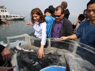releasing sturgeon into yangtze