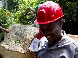 men sawing tree