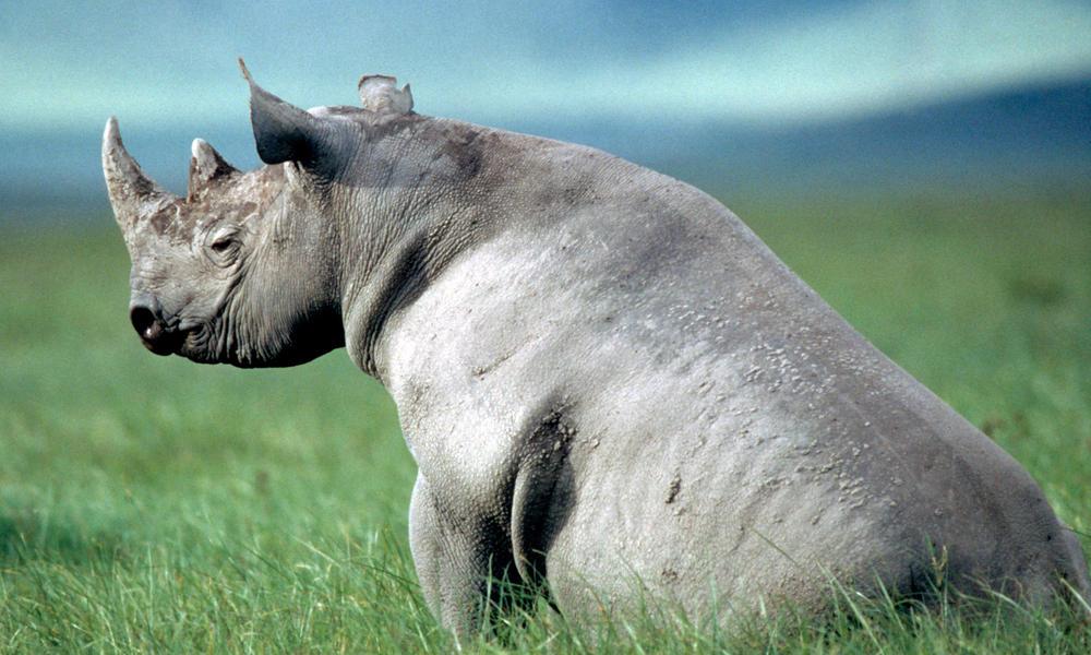 Black_rhino_8.6.2012_why_they_matter_hi_204737