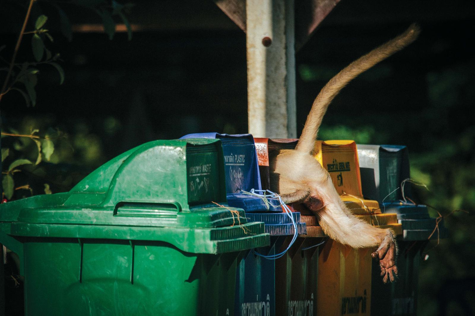 Morgan_heim_macaques_in_trash-3358