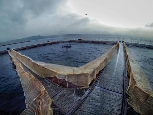AquaChile salmon farm