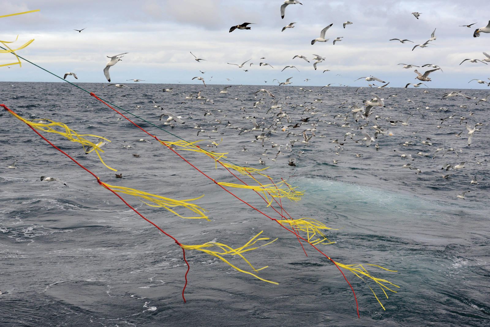 Protecting albatross from fishing lines magazine for The fishing line