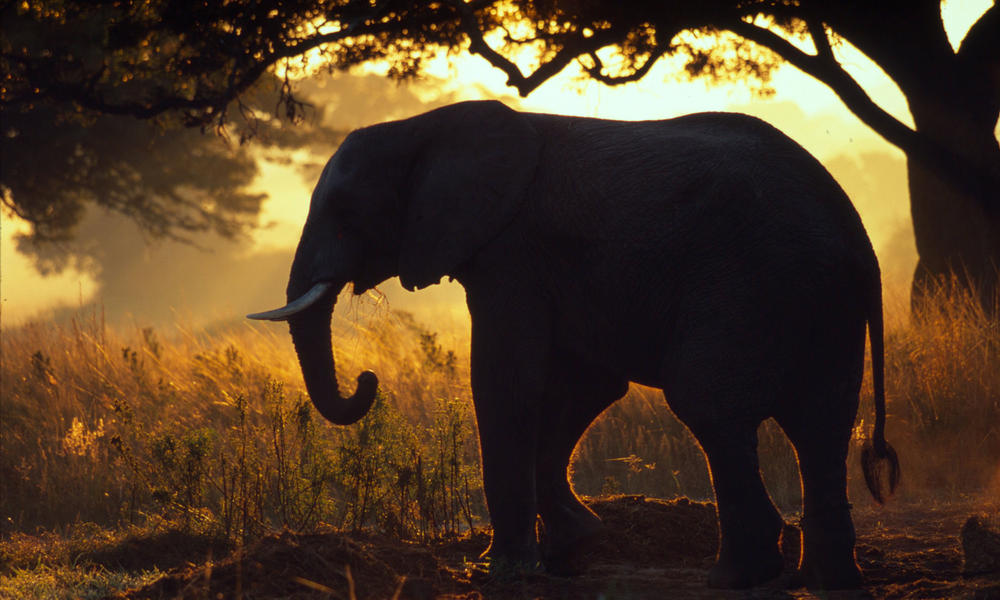 Taking a Stand Against Wildlife Crime