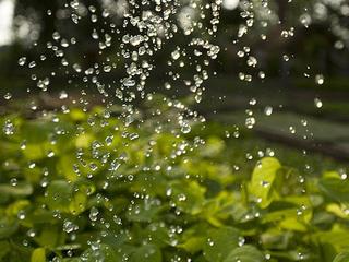 watering plants Nepal