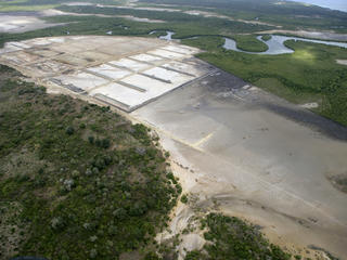 Shrimp Farm