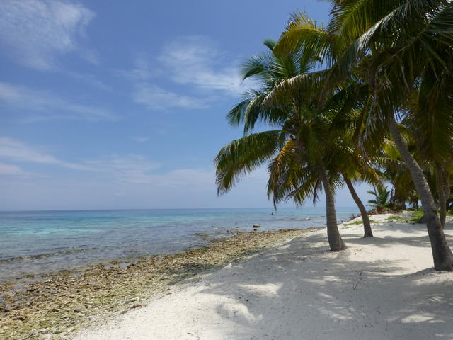 Mesoamerican_Reef_7.25.12_Places