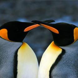 Penguin_07.24.2012_help
