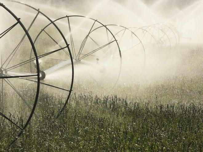 Irrigation Sprinkler Spraying Water on Farm Field