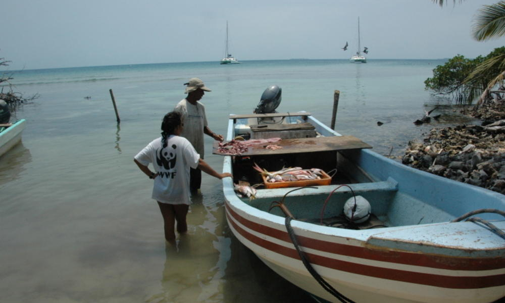In Buttonwood Key, Belize fishermen claim their catch so that officials can keep track of the local fishing industry.