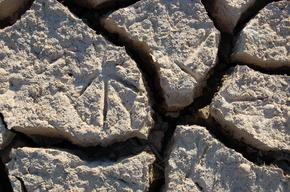 Bird footprints in crackled ground, Spain