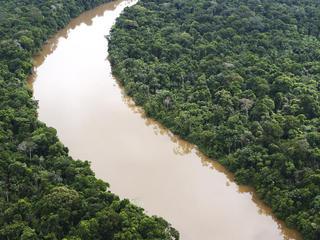 The Amazon rain forest. Loreto region, Peru.