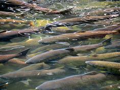 Farmed seafood matter shutterstock 107205503