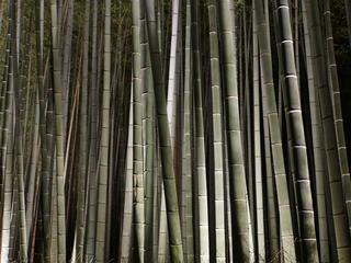 close up bamboo