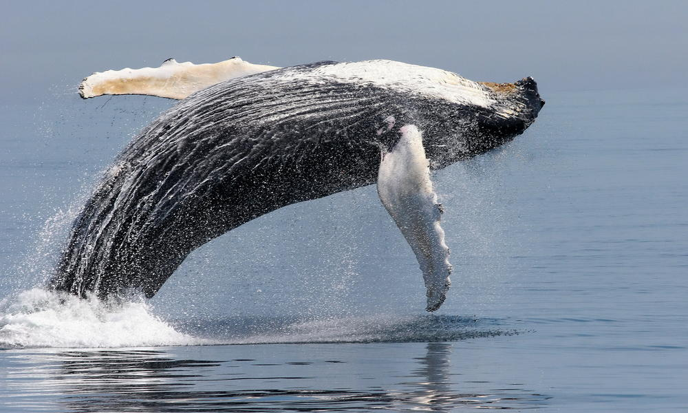 Giants of the Ocean: Whale Facts