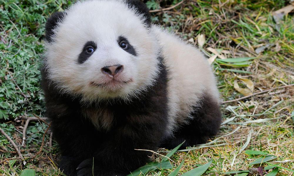 naturepl.com / Eric Baccega / WWF