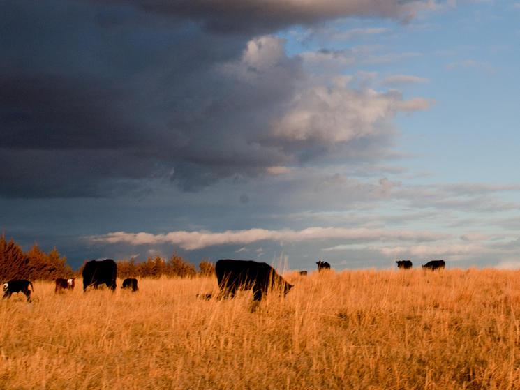 Ranching in mullen nebraska jesse tufte %284 of 13%29