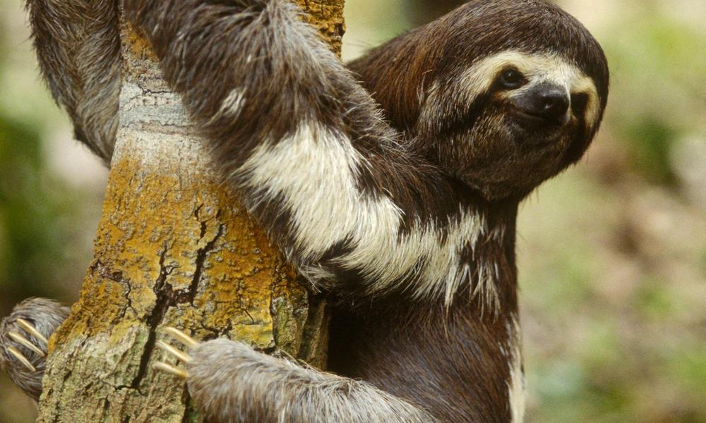 10 Species that Hug Trees | Stories | WWF