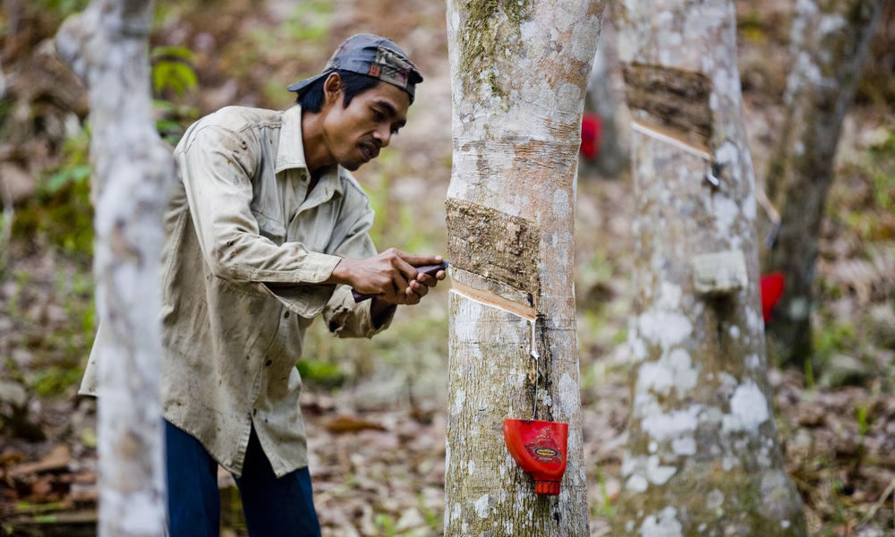 7 Products You Didn T Know Come From Trees Stories Wwf