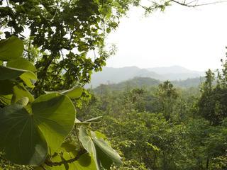 churia forest