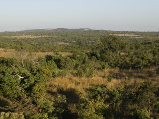 miombo woodlands