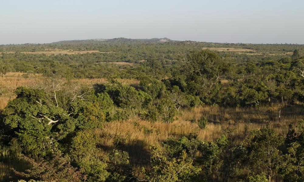 Miombo woodlands martin harvey wwf canon mid 113209