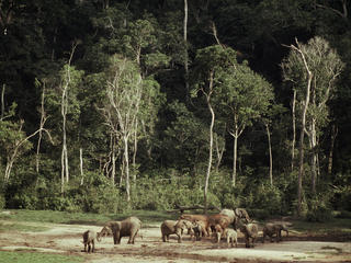 deforestation congo basin