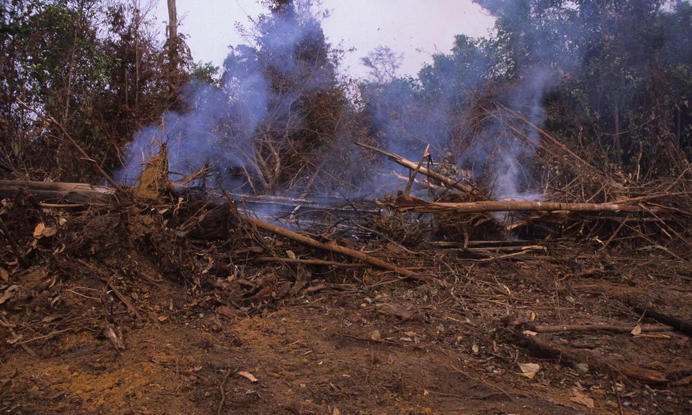 Borneo alain compost  wwf canon mid 112934