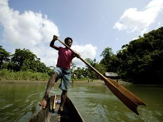 deforestation new guinea
