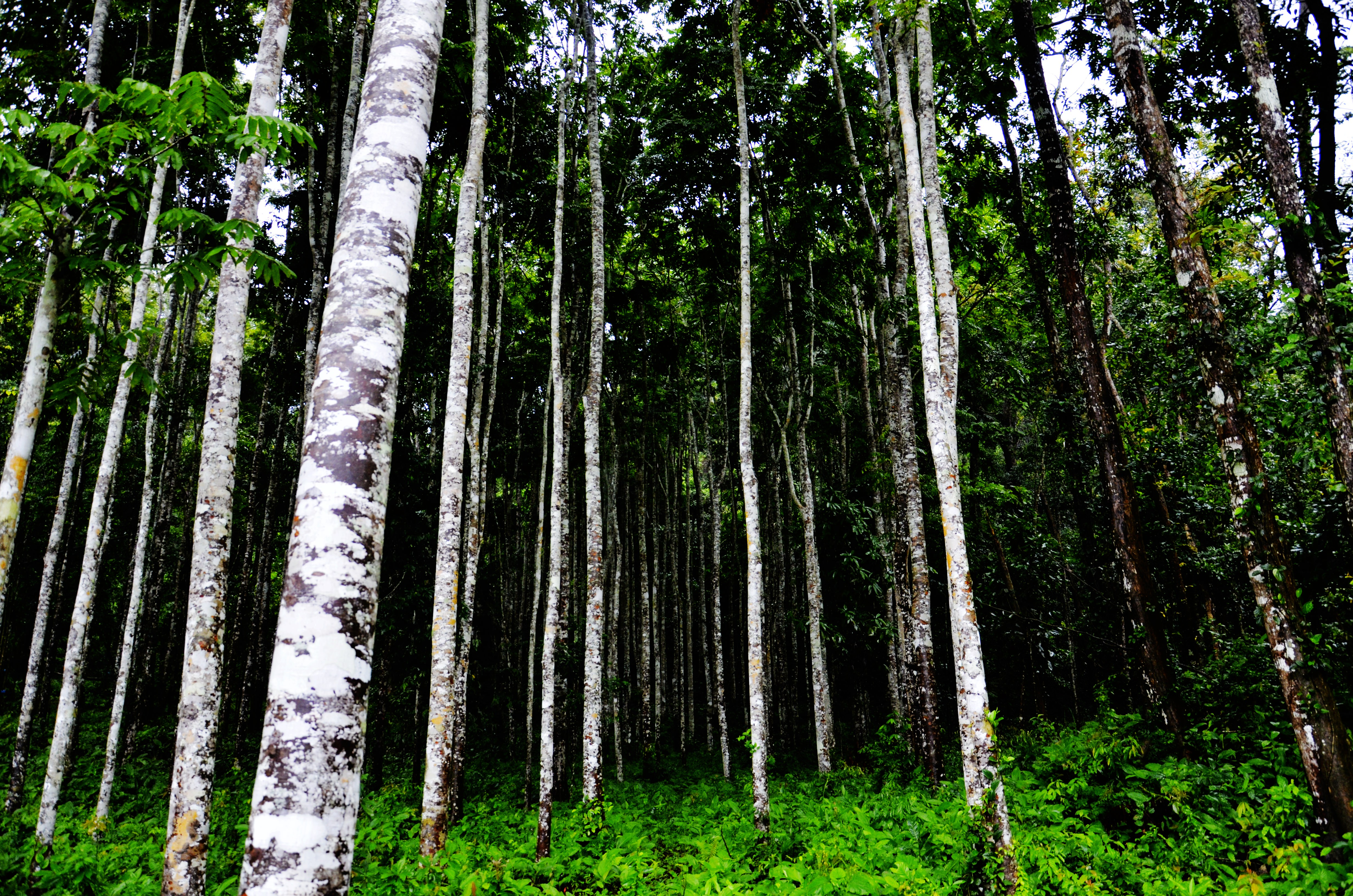 Immerse Yourself in a Forest for Better Health