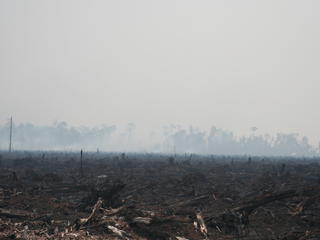Borneo and Sumatra - Deforestation in Riau