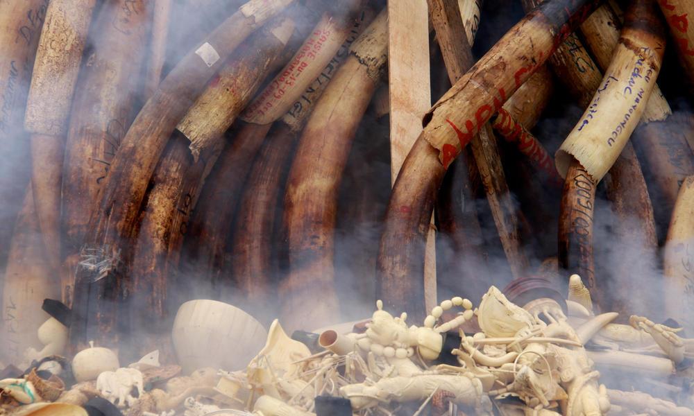 ivory burn in Gabon