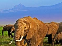 Kilimanjaro elephants web 112370