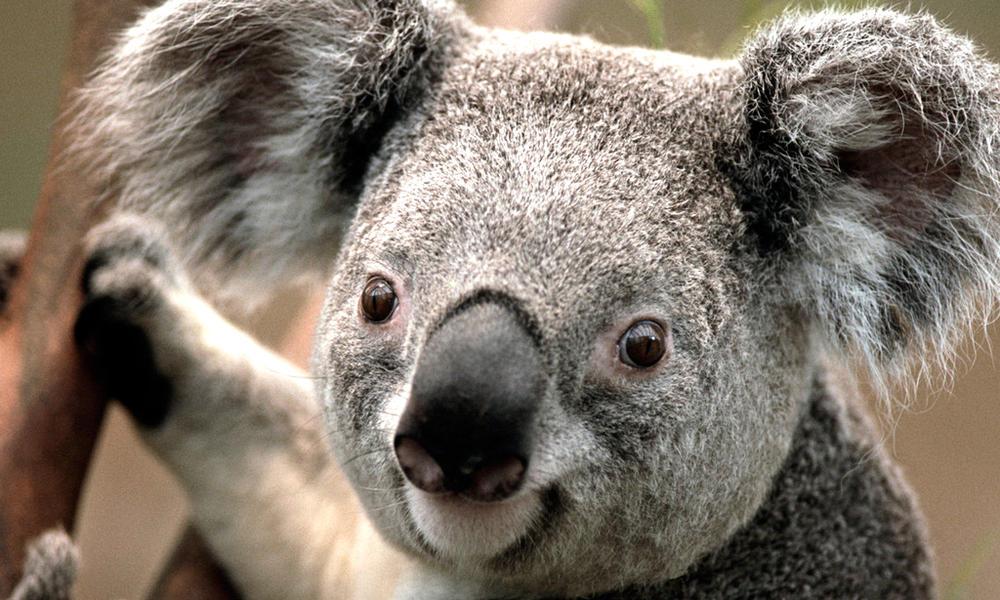 3 Billion Animals Impacted by Australia's Bushfire Crisis